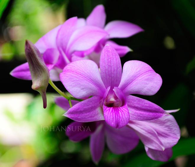 Bunga Sekitar Kita - Macro Photography