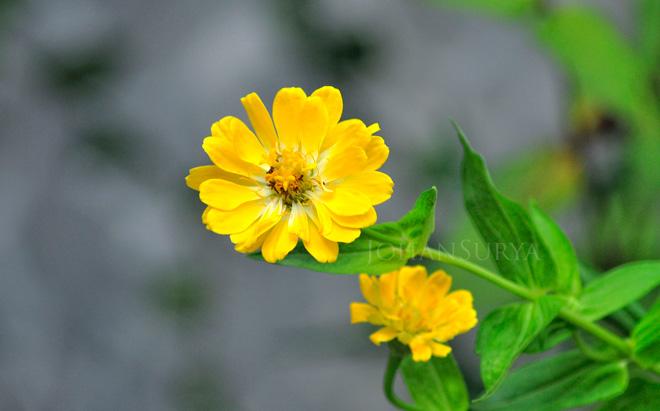 bunga-taman-01