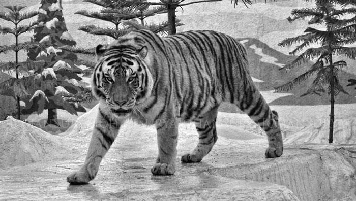 Tips Memotret Binatang