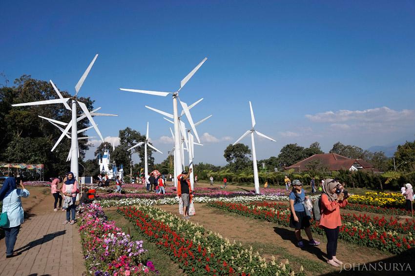 Taman Bunga Celosia - Gedong Songo - Bandungan